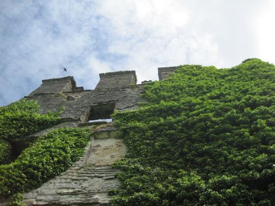 Photo of jackdaw over Menlo Castle